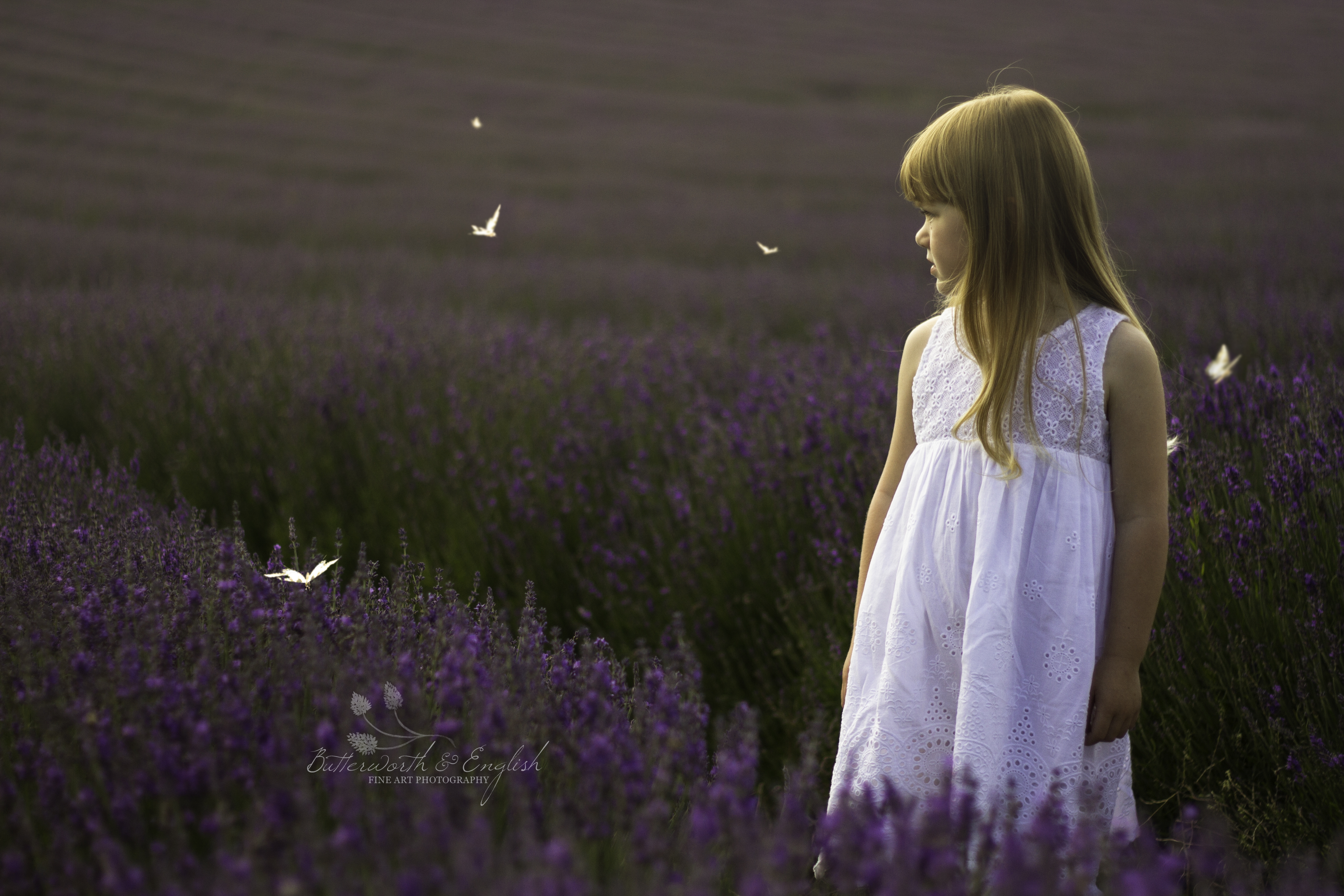 Lordington Lavender Photography