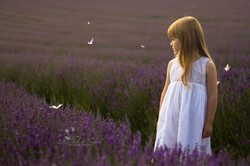Lordington Lavender Photography