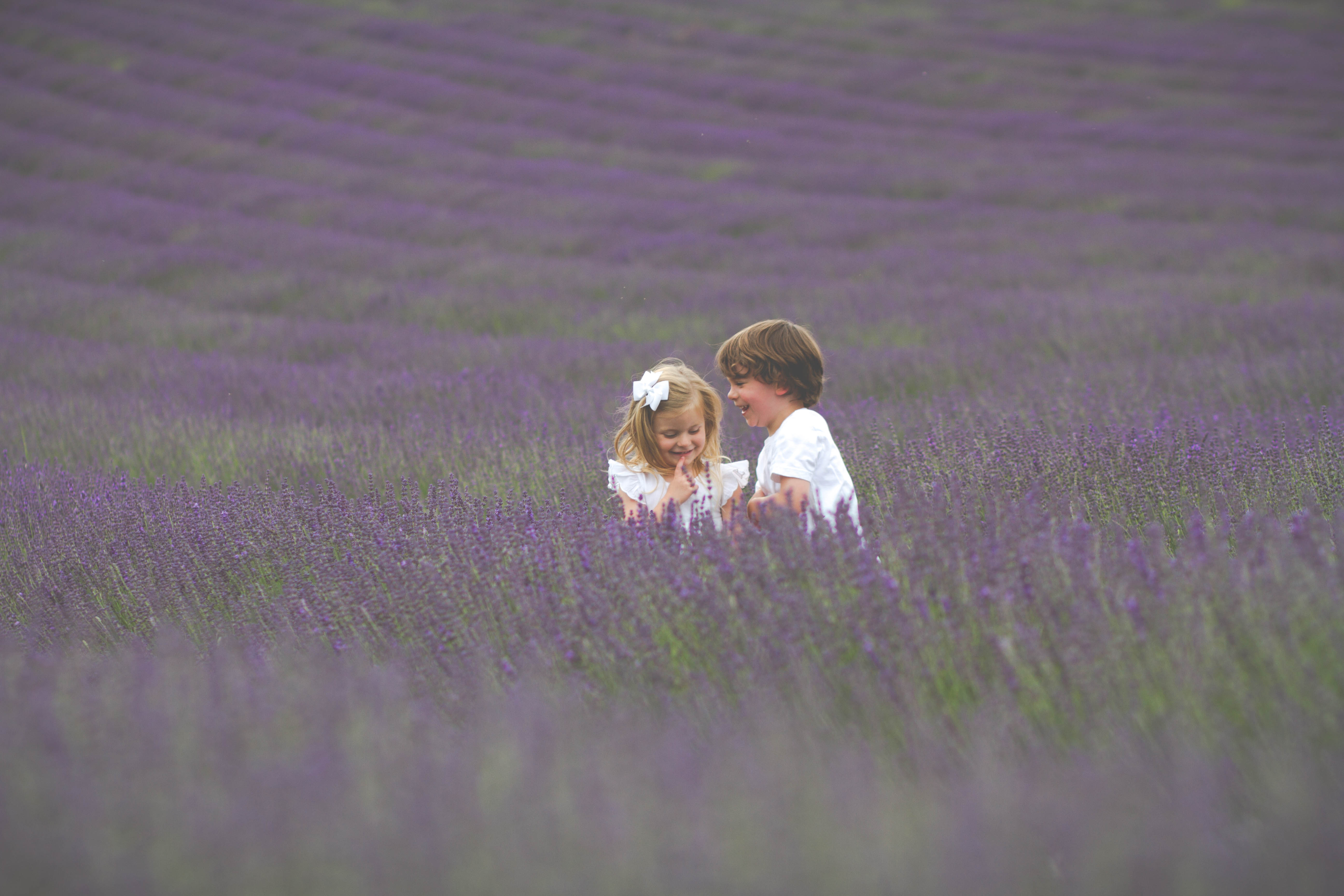 Lordington Lavender Photographs