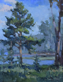 Old Pine at New Hope 11x14