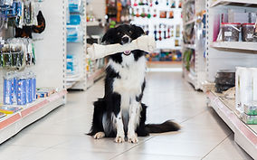 Border-Collie mit Knochen