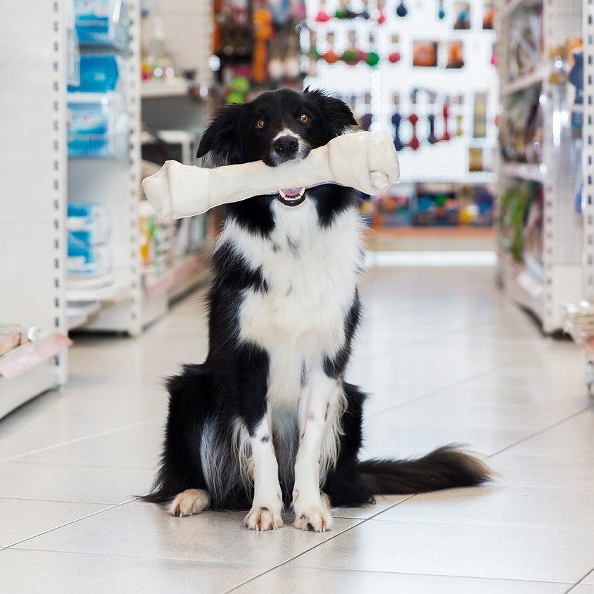 Allwinds Dog First Aid Course - Taunton