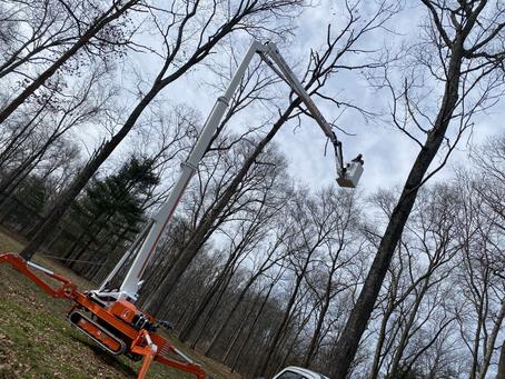 Tree Trimming in Gainesville VA
