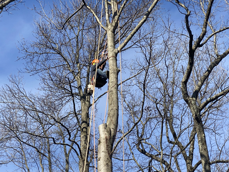 3 Reasons to Hire A Tree Service Provider For Your Home