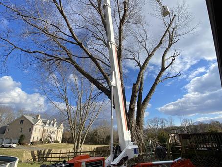 Benefits of Tree Trimming in Gainesville, VA