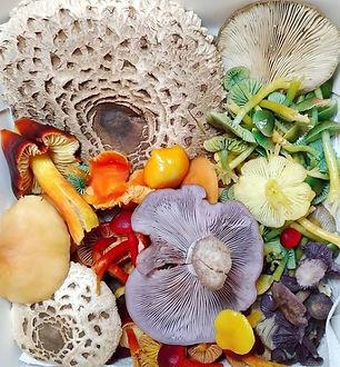 Mushroom Box.jpg