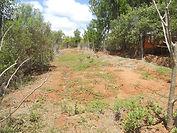 Jardin potager de l'école d'Ambalavao (Andramasina)