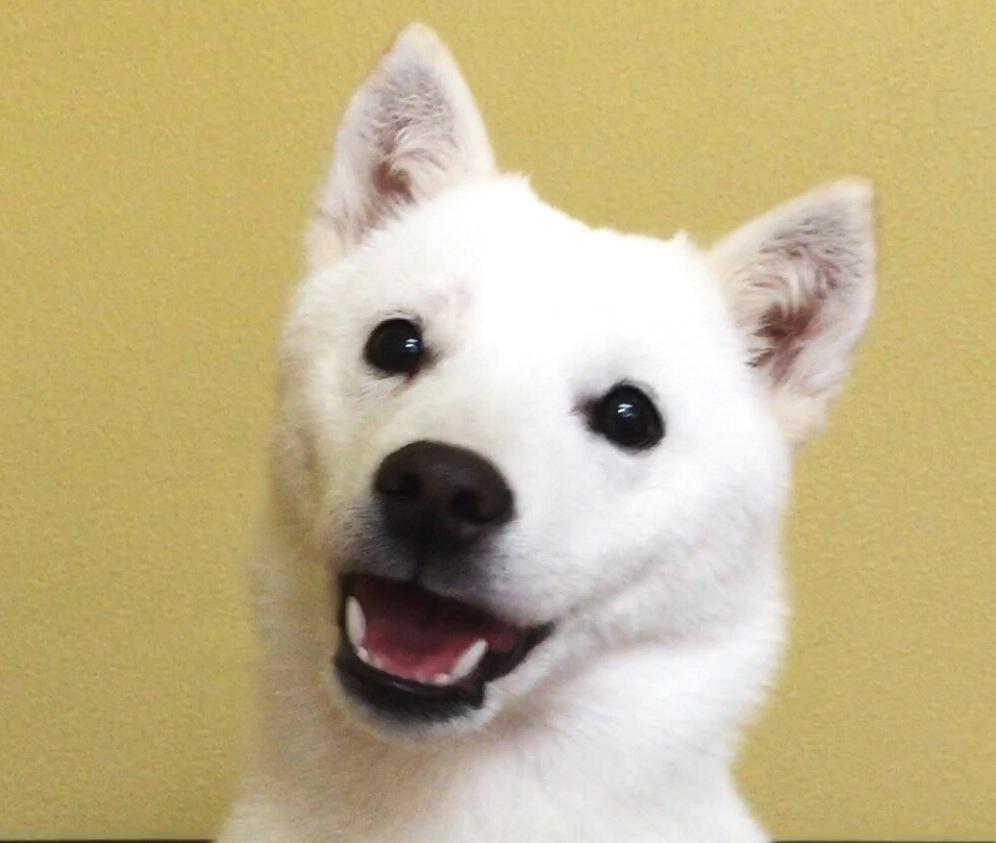 北海道犬☆ほっかいどういぬ