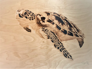 Sea Turtle_Charriez.jpg