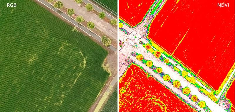 Imagen multiespectral NDVI Salud de las plantas