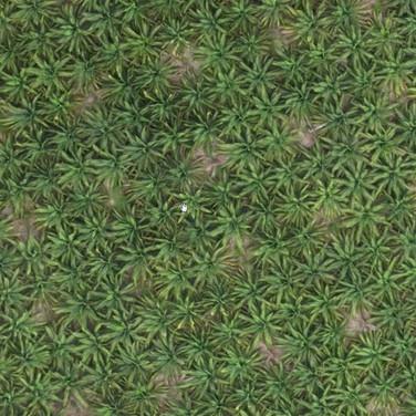 Forestal y Medio Ambiente. Conteo de Árboles y Plantas