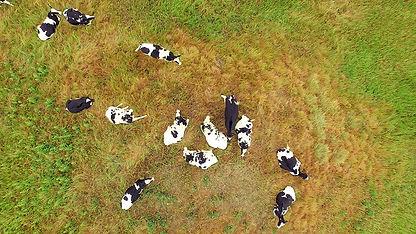 Inspección de campos de ganado con dron en Guatemala