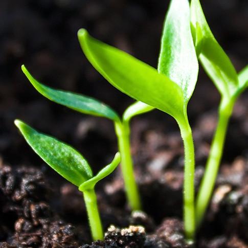Análisis de la Salud de los Cultivos. Agricultura de precisión