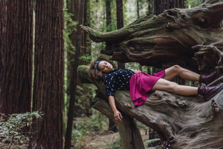 Redwoods with Lasette