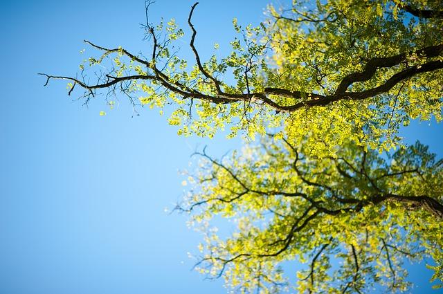 tree-114264_640