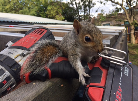 Squirrel Aid