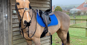 HLB Free Rein Sapphire pad and bandages