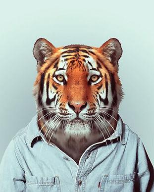 Fashion-Zoo-Animals8.jpg