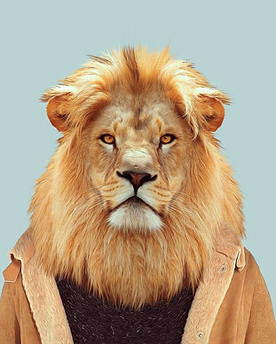 Masai-Lion-Panthera-Leo-Nubica.jpg