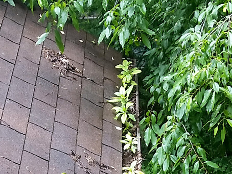 Water, water, everywhere - Why you need to clean your gutters