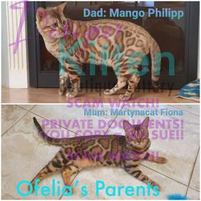 Princess Ofelia Parents logo.jpg