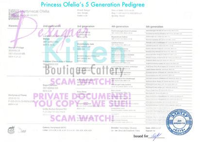 Princess Ofelia 5 Year Pedigree transfer