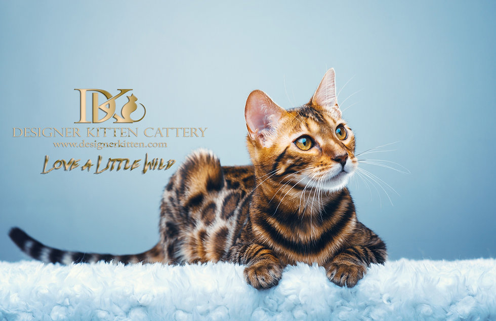 WEBSITE LEAPORD BACKGROUND cat2.jpg
