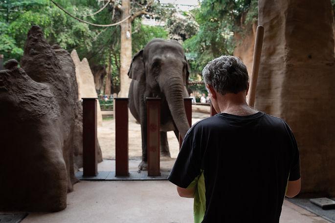 olifantenproject.jpg