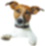 Top Dog Marketing for web site design and marketing assessments.