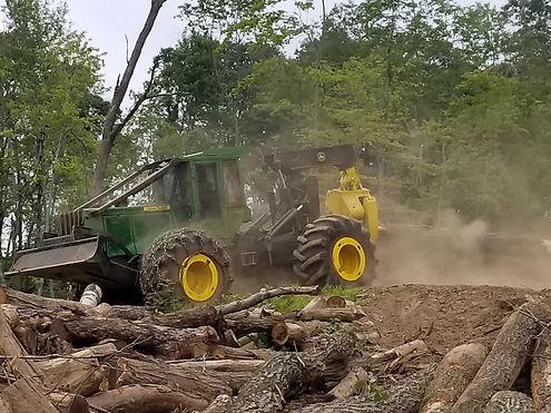 logging the woods