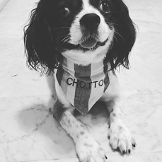 A doggy bandana is the easiest way to add a little style and personality to your dog! Just slide your dogs collar through the top of the ban