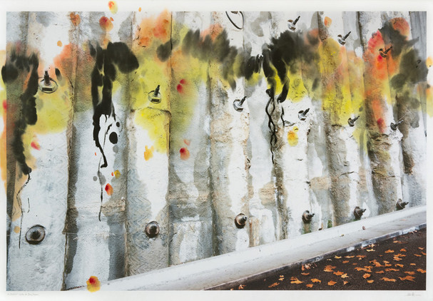 the darkness in between the tree trunks, 2012