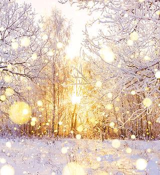 beautiful snowy winter landscape panoram