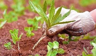 Pulling the Weeds.jpg