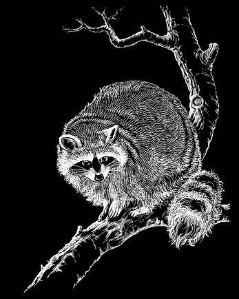 Illustration »Waschbär«, Grafische Umsetzung, Negativ-Bild