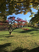 Jackson Park Wooded Island 1.jpg