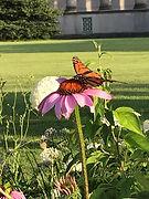 Monarch MSI.jpg