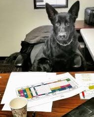 dog doing paperwork_edited.jpg