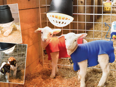 How To Keep Farm Animals Warm During The Winter