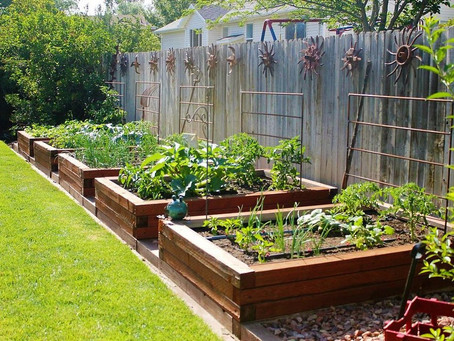 Vegetable Planting Tips