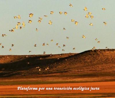 EN NEREIDE NOS UNIMOS A LA PLATAFORMA POR UNA TRANSICIÓN ECOLÓGICA JUSTA
