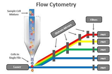 Flow Cytometry Diagram