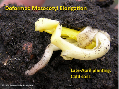 April Showers, May Slow Planting