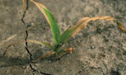 Herbicide Injury