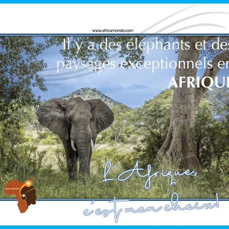 """""""L'Afrique c'est mon Choix!"""" La campagne digitale d'Africa Mondo qui fait la promotion de l'Afrique"""