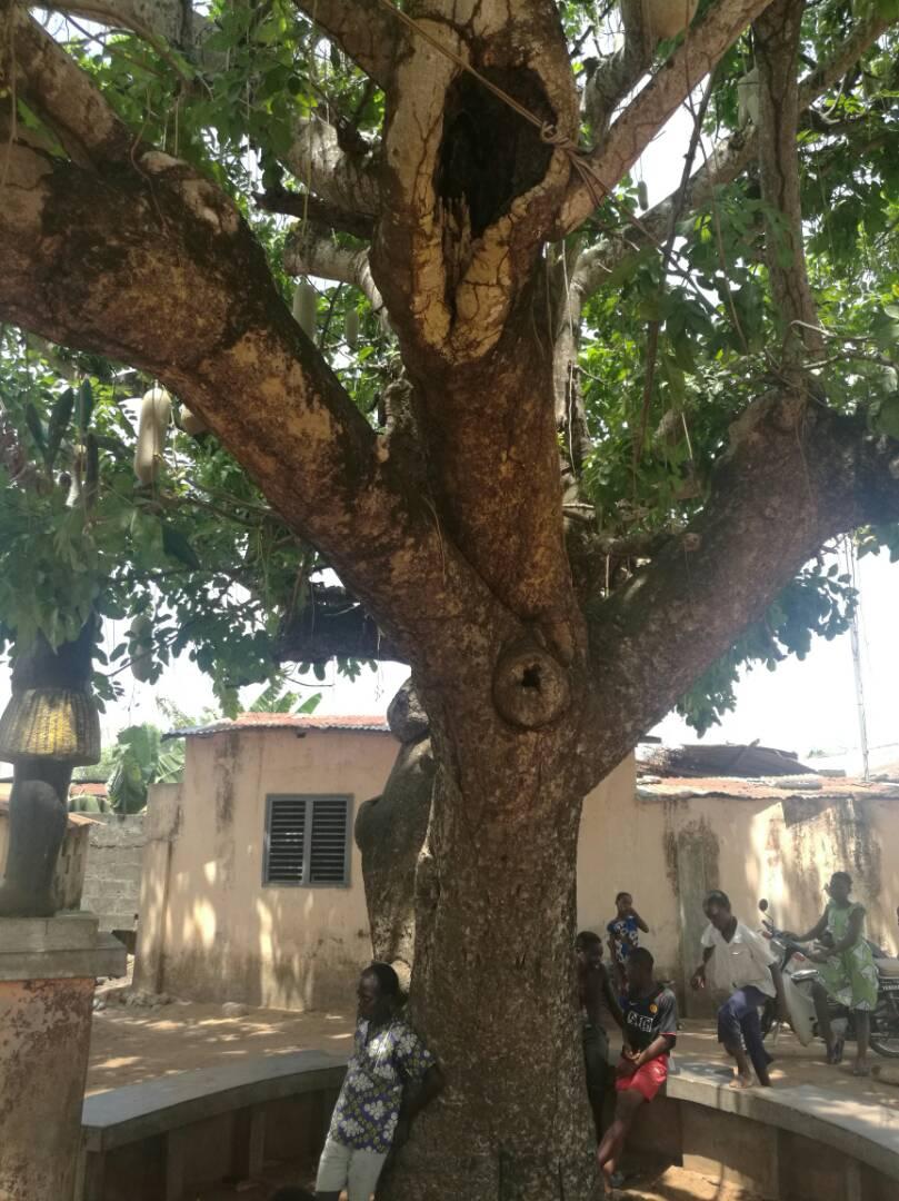 ouidah arbre de loubli