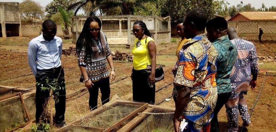 Production et transformation du Moringa (Bénin)