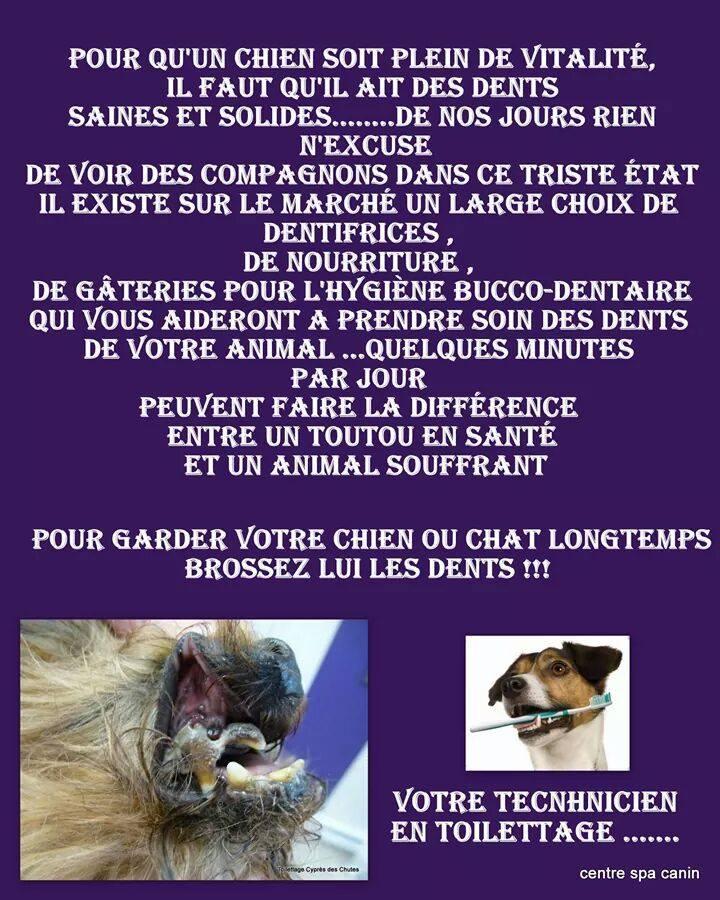 dentifrice__à_la_menthe.jpg