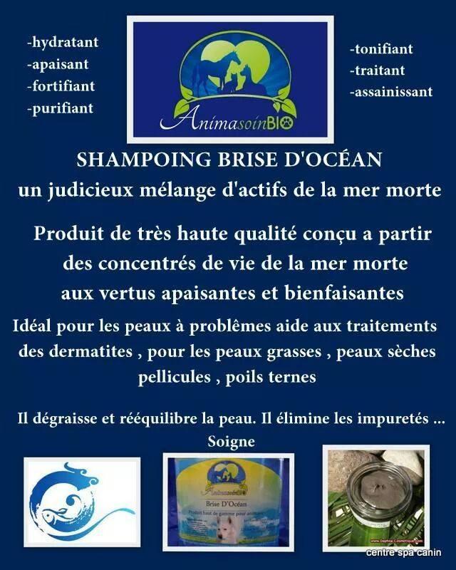 Shampoing_brise_d'océan.jpg