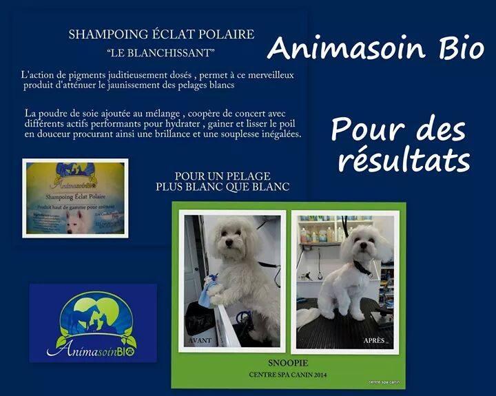 Shampoing_Blanchissant_éclat_polaire.jpg